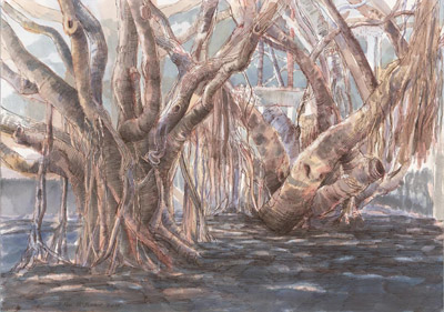 Banyan trees, Jubilee Park