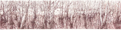 The Kommo Toera forest walk 2