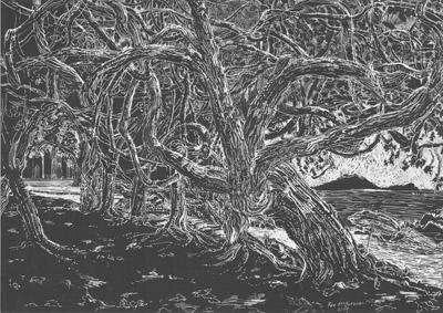 Cottonwood Trees Eimeo Beach