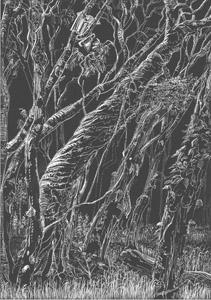 Paper barks Kommo Toera forest walk
