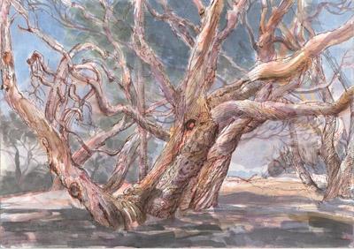 Trees at Illawong Beach